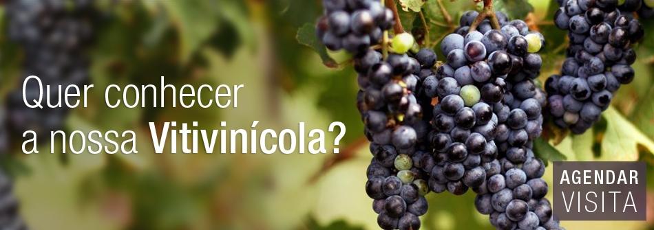 banner conheca a vitivinicola